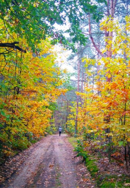 zacznijcie biegać jesienią afterfit catering